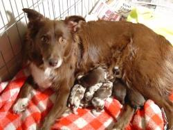 Grace and pups - day 1